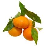 clementina_fulla_fruiteria_saus_vic_mini